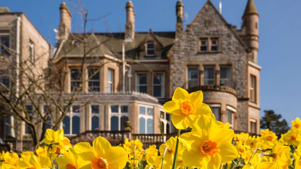 daffodils-at-culloden-estate-and-spa.jpg