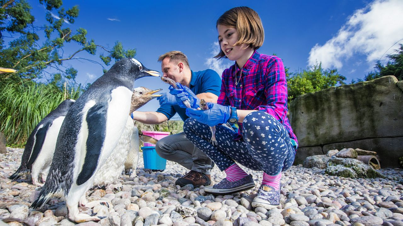 Family feeding penguins at Belfast Zoo