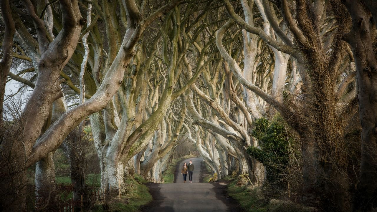 Dark Hedges Featured in Game of Thrones as the Kingsroad