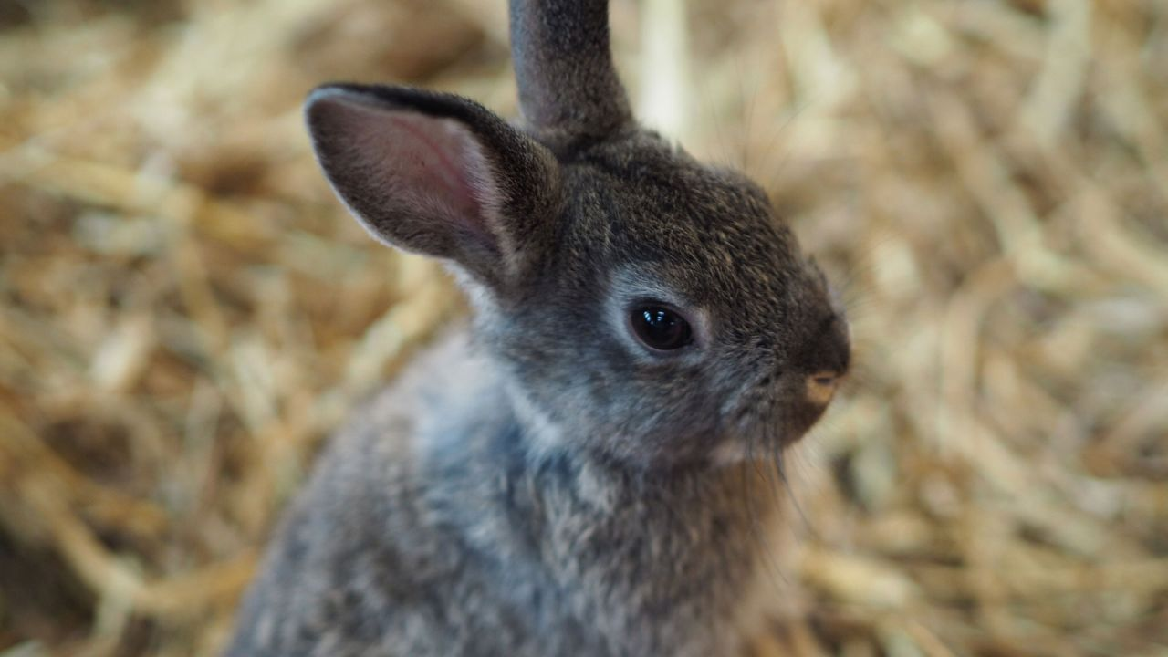 Bunny at Streamvale Open Farm