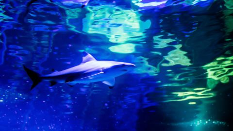 Shark Awareness Day at Exploris Aquarium